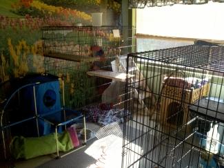 Anita's Puppy Palace